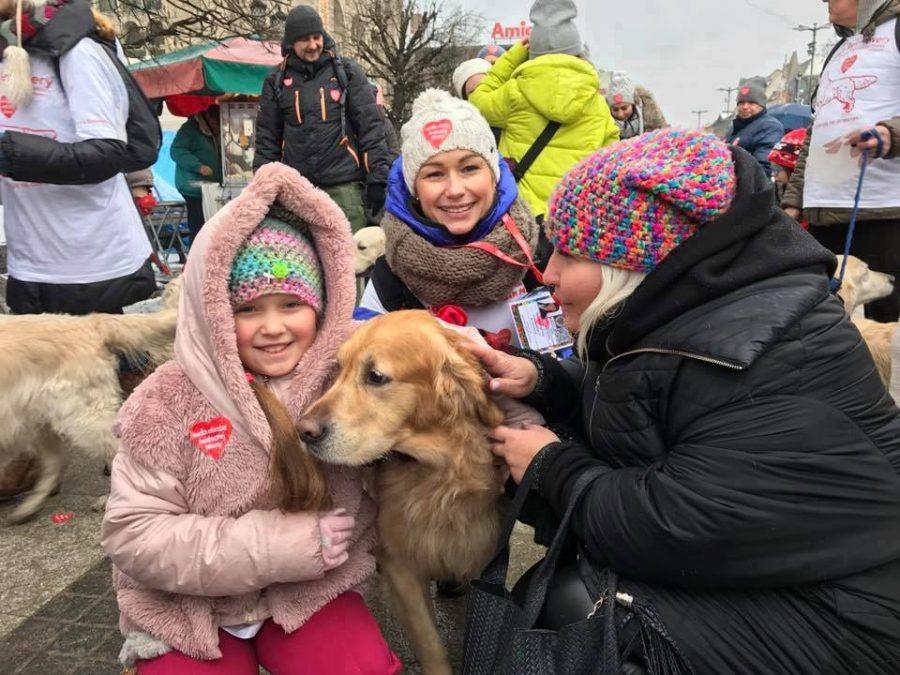 Cudowna Psy rasy Golden Retriever po raz dziewiąty z WOŚP | Nasz Głos GW41